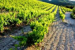Vineyards near Gigondas, Provence, France. Outdoor, outdoors, outside, exterior, exteriors, europe, western, provence-alpes-cote, dazur, vaucluse, cotes, du stock images