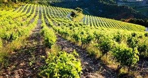 Vineyards near Gigondas, Provence, France. Outdoor, outdoors, outside, exterior, exteriors, europe, western, provence-alpes-cote, dazur, vaucluse, cotes, du royalty free stock photography