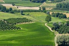Free Vineyards Near Govone, Asti, In Monferrato Royalty Free Stock Photos - 128569398