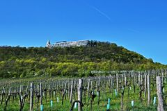 Vineyards near Kahlenberg, Wien royalty free stock images