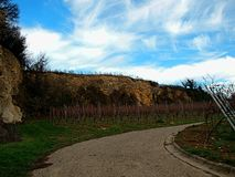 Vineyards near the low hill on a sunny day royalty free stock image