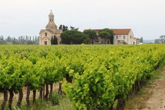 Vineyards near Montcalm, Vauvert, France. Montcalm is a hamlet of about twenty people belonging to the French town of Vauvert in the Gard Languedoc-Roussillon Royalty Free Stock Images