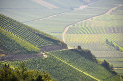 Vineyards near mosel river, germany Royalty Free Stock Photo