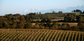 Vineyards near the Pyrenees. Royalty Free Stock Image