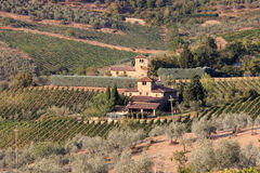 Vineyards near Radda in Chianti, Tuscany, Italy. The history of Chianti dates back to at least the 13th century with the earliest incarnations of Chianti as a Royalty Free Stock Image