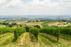 Vineyards near San Gimignano (Siena, Tuscany) Stock Photos