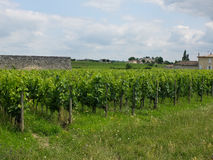 Vineyards near sant Emilion in France Stock Photography