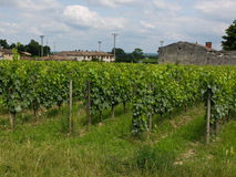 Vineyards near sant Emilion in France Stock Image