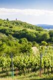 vineyards near Velke Bilovice, Czech Republic stock image