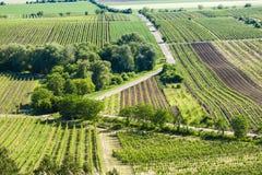 vineyards near Velke Bilovice, Czech Republic royalty free stock photography