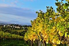 Vineyards near Vienna, Austria stock photo