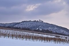 Vineyards near Vienna, Austria in winter. Vineyards near Vienna with the Leopoldsberg in the background royalty free stock photography
