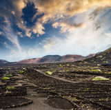 Vineyards near volcanic mountains in Lanzarote Stock Photography