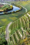 Vineyards at the Neckar Stock Images