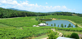Vineyards in North Georgia Stock Photography