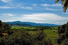 Vineyards in Northern California Royalty Free Stock Images