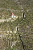 Vineyards in northern Rhone Valley Royalty Free Stock Photos