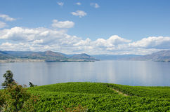 Vineyards in Okanagan Valley. Vineyards on the Naramata Bench overlooking Okanagan Lake in British Columbia Stock Image