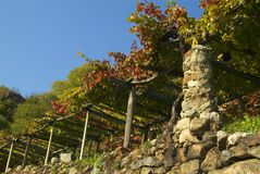 Vineyards on the old road called Via Francigena. The nature and with the winter, and the rigors of frost Stock Photos