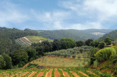 Vineyards and olive fields in Chianti, Tuscany Royalty Free Stock Images