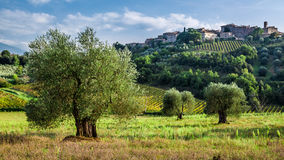 Vineyards and olive groves in Tuscany Royalty Free Stock Photography