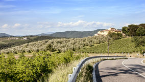 Vineyards and olive groves in Tuscany Stock Images