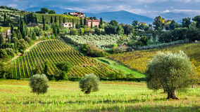 Vineyards and olive trees in a small village, Tuscany Stock Image