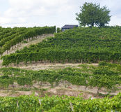 Vineyards in Oltrepo Pavese (Italy) Royalty Free Stock Photos