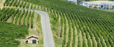 Vineyards in Oltrepo Pavese (Italy) Royalty Free Stock Images