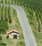 Vineyards in Oltrepo Pavese (Italy) Royalty Free Stock Image
