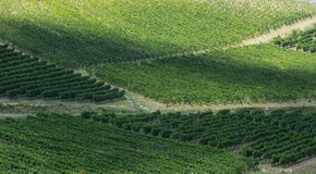 Vineyards in Oltrepo Pavese (Italy) Royalty Free Stock Photography