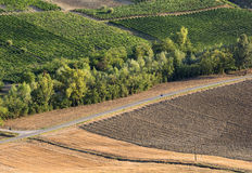 Vineyards in Oltrepo Pavese (Italy) Stock Images