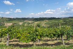Vineyards in Oltrepo Pavese (Italy) Stock Photos