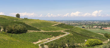 Vineyards in Oltrepo Pavese (Italy) Stock Photography