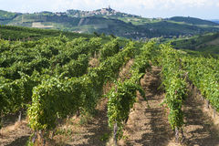 Vineyards in Oltrepo Pavese (Italy) Stock Image