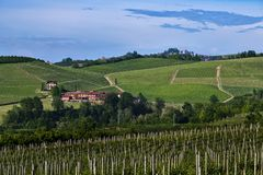 Vineyards On The Beautiful Hills In The Roero Area Of Piedmont Italy Royalty Free Stock Photo