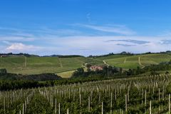 Vineyards On The Beautiful Hills In The Roero Area Of Piedmont Italy Royalty Free Stock Image