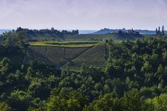 Vineyards On The Pianezzo Hillside Located In The Municipality Of Dogliani Piedmont Italy Stock Images