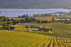 Vineyards and Orchards in Osoyoos Royalty Free Stock Images