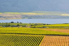 Vineyards and Orchards in Osoyoos Royalty Free Stock Photos