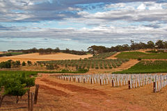 Vineyards and orchards under cumulus and cirrus cloudscape in Barossa Valley Royalty Free Stock Photography