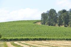 Vineyards in Oregon Wine Country. Wine vineyards in Willamette Valley in Oregon stock photo