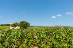 Vineyards os southern France, near Corneilhan Royalty Free Stock Photos