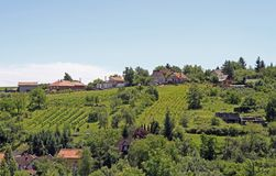 Vineyards in the outskirt of Eger royalty free stock images
