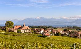 Vineyards overlooking a lake on the Alps Royalty Free Stock Photos