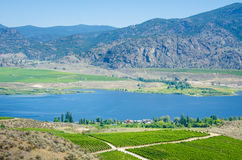 Vineyards overlooking Osoyoos Lake in British Columbia. Rich vineyards growing in the desert lands of the southern part the Okanagan Valley overlook Osoyoos Lake Royalty Free Stock Image