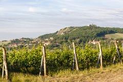vineyards, Palava, Moravia region, Czech Republic stock photo