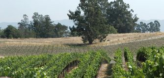 Vineyards panorama Royalty Free Stock Images