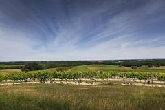 Vineyards panorama in South of France stock photos