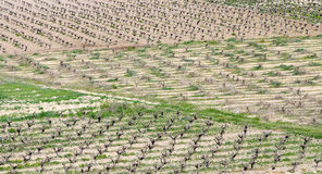 Vineyards, Paphos, Cyprus Stock Photo